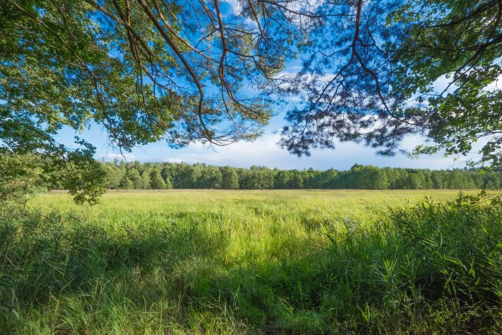 Heritage Acres strives to preserve land near Cincinnati through green burial, such as this wooded field