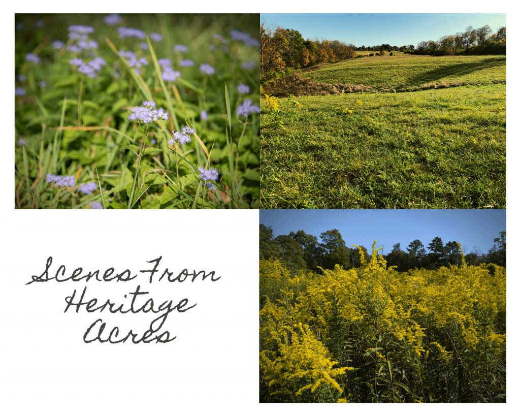 Three Images of Heritage Acres Land