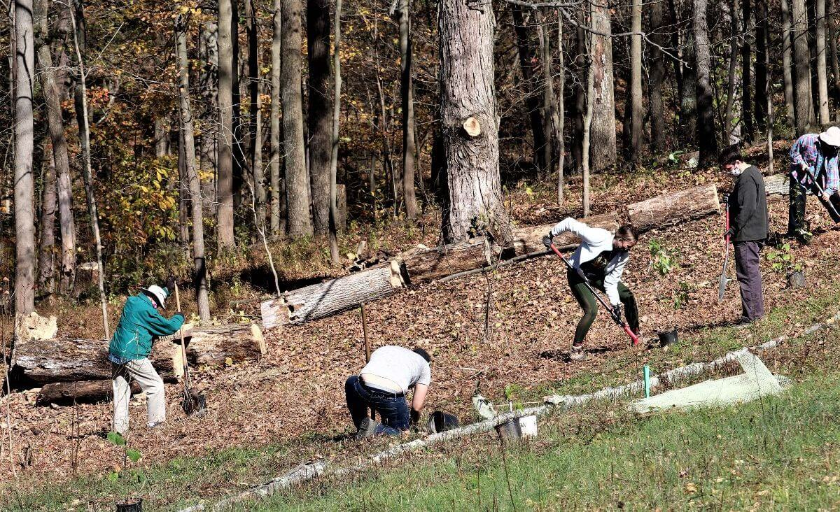 Four volunteers on a hillside at Heritage Acres planting trees.